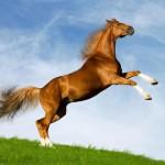 Как встречать 2014 год Лошади? Привлекаем удачу!