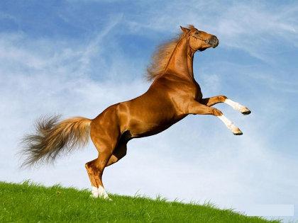 что ждать в год лошади