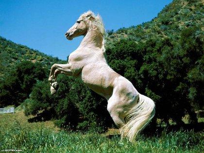 гороскоп на год лошади